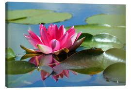 Canvas  Water lily with reflection - GUGIGEI