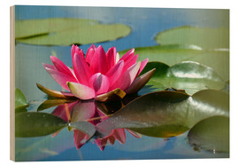 Wood print  Water lily with reflection - GUGIGEI
