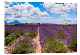 Acrylic print  Lavender field on the Plateau de Valensole in Provence - Thomas Klee