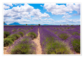 Premium poster Lavender field on the Plateau de Valensole in Provence