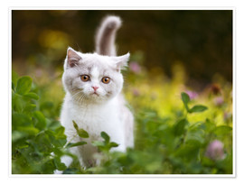 Premium poster Kitten on a green meadow