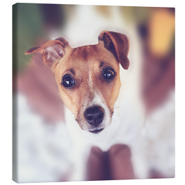 Canvas  Jack Russel - Janina Bürger