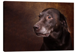 Canvas  Old Chocolate Labrador Portrait - Janina Bürger