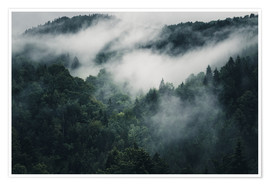 Premium poster Mystic forests in fog