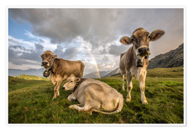 Premium poster Rainbow and cows, Valtellina, Lombardy, Italy