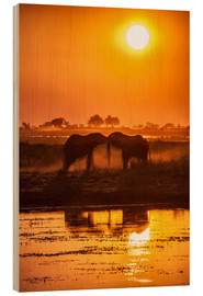 Wood print  Elephants at sunset, Chobe Park,Botswana, Africa - Roberto Sysa Moiola