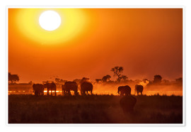 Premium poster Elephants at sunset, Chobe Park, Botswana, Africa