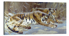 Aluminium print  Two tigers resting in shade - John Charles Dollman