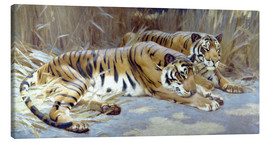 Canvas print  Two tigers resting in shade - John Charles Dollman