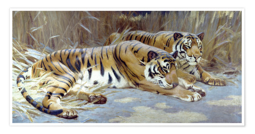 Premium poster Two tigers resting in shade