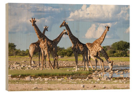 Wood print  Giraffes at a water hole, Etosha, Namibia - Circumnavigation