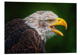 Friedhelm Peters - Portrait of bald eagle