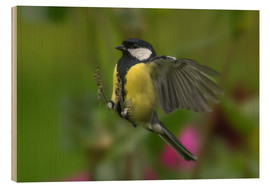 Wood print  Great Tit in landing approach - Friedhelm Peters