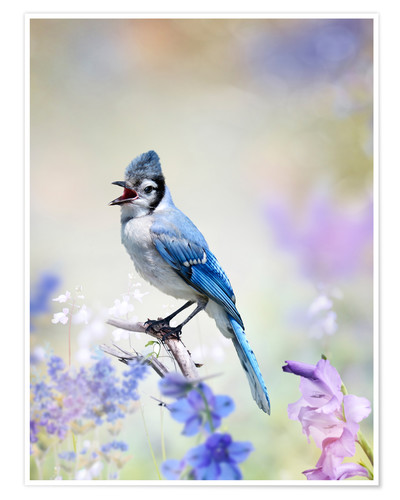 Premium poster Blue Jay Perched In The Garden