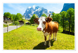 Premium poster  Miss Willow Cow
