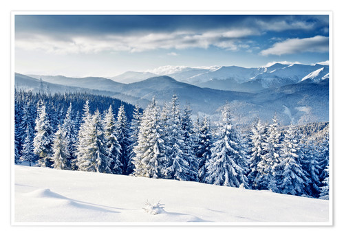 Premium poster Winter forest with fir trees