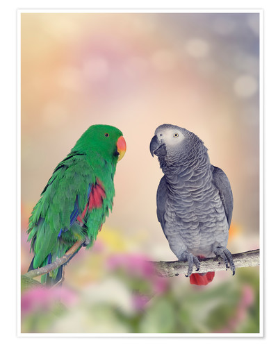Premium poster Graupapagei and precious parrot on branches