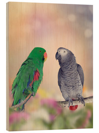 Wood print  Graupapagei and precious parrot on branches