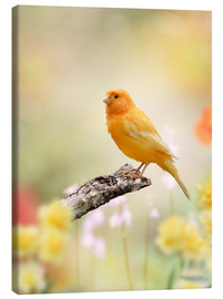 Canvas print  yellow canary