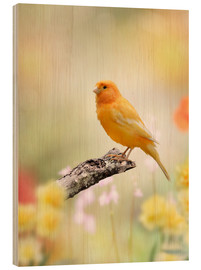 Wood print  yellow canary
