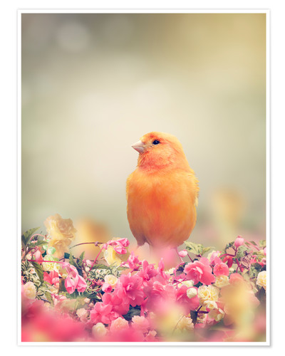 Premium poster Yellow Bird Perches In Flower Garden