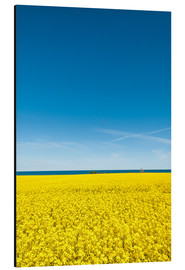 Aluminium print  Yellow and blue