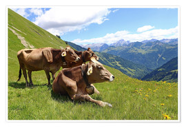 Premium poster  Cows relax on the mountain