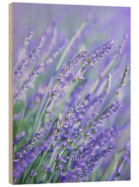 Wood print  Purple Lavender