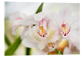 K&L Food Style - Orchids in close-up