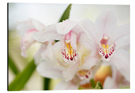 Aluminium print  Orchids in close-up - K&L Food Style