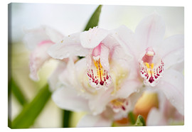 Canvas print  Orchids in close-up - K&L Food Style