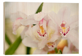 Wood print  Orchids in close-up - K&L Food Style