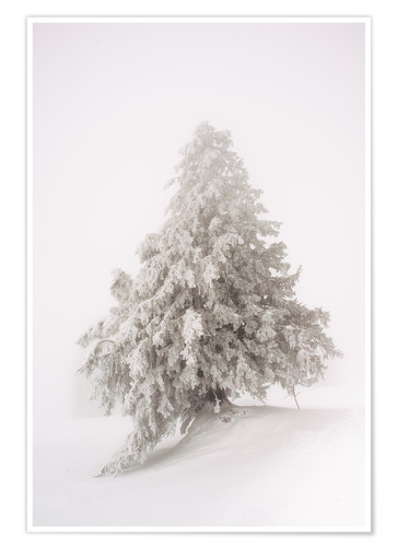 Premium poster Single snow covered tree in thick fog in winter  Rigi, Switzerland