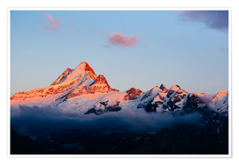 Premium poster  Schreckhorn alpen glow at sunset  View from First, Grindelwald, Switzerland - Peter Wey