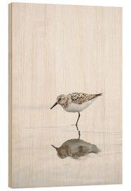Wood print  One legged black turnstone lat  Arenaria melanocephala - Peter Wey