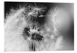 Acrylic glass  Flying seeds of the dandelion - Julia Delgado