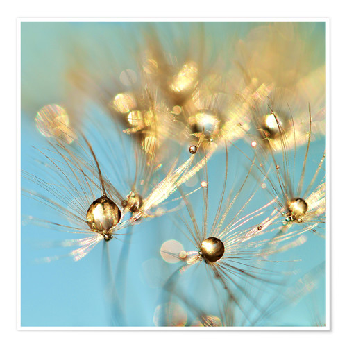 Premium poster Dandelion and pearls