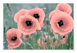 Premium poster Poppies in closeup, pastel
