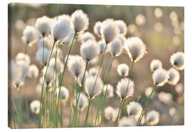 Canvas print  Grass in the breeze - Julia Delgado