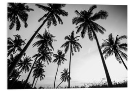 Foam board print  Silhouettes of palm trees