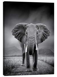 Canvas print  Elephant on black background