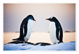 Two identical penguins