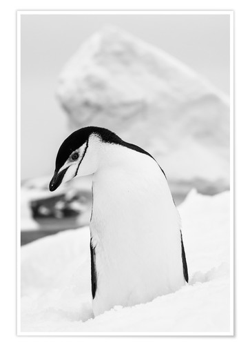 Premium poster Penguin on white snow