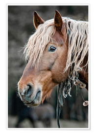 Premium poster A beautiful horse in the countryside