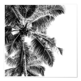 Premium poster  High palms on a tropical beach