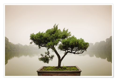 Japanese Bonsai In Zen Garden Posters And Prints