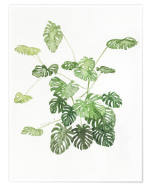 Poster  Monstera - Jennifer McLennan