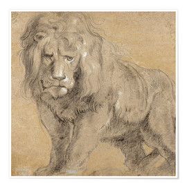 Premium poster  Study of a lion - Peter Paul Rubens