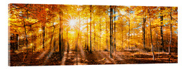 Acrylic glass  Autumnal forest panorama in sunlight - Jan Christopher Becke