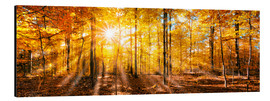 Aluminium print  Autumnal forest panorama in sunlight - Jan Christopher Becke